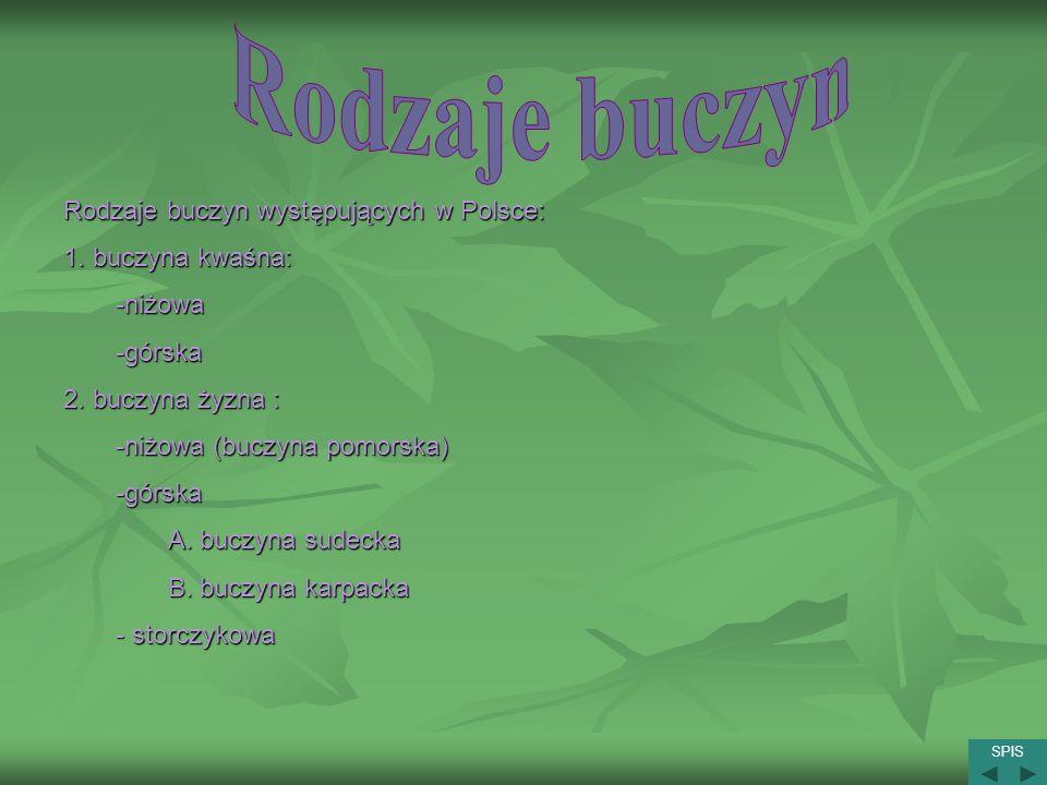 Rodzaje buczyn występujących w Polsce: 1. buczyna kwaśna: -niżowa-górska 2. buczyna żyzna : -niżowa (buczyna pomorska) -górska A. buczyna sudecka B. b