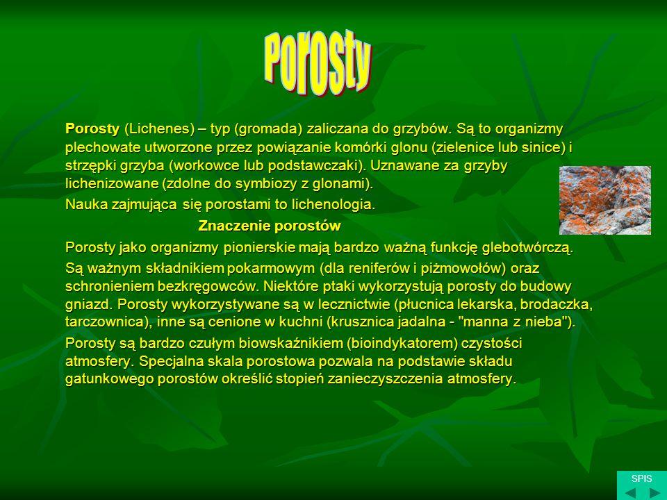 Porosty (Lichenes) – typ (gromada) zaliczana do grzybów. Są to organizmy plechowate utworzone przez powiązanie komórki glonu (zielenice lub sinice) i