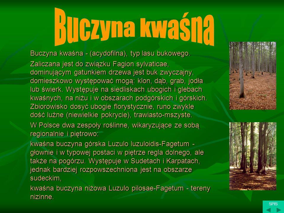 Buczyna kwaśna - (acydofilna), typ lasu bukowego. Zaliczana jest do związku Fagion sylvaticae, dominującym gatunkiem drzewa jest buk zwyczajny, domies