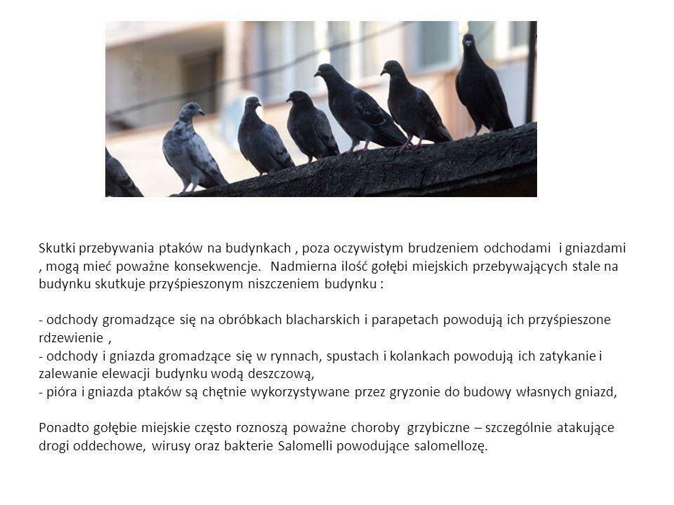 Skutki przebywania ptaków na budynkach, poza oczywistym brudzeniem odchodami i gniazdami, mogą mieć poważne konsekwencje. Nadmierna ilość gołębi miejs