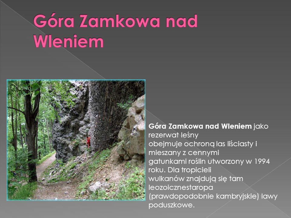 Góra Zamkowa nad Wleniem jako rezerwat leśny obejmuje ochroną las liściasty i mieszany z cennymi gatunkami roślin utworzony w 1994 roku. Dla tropiciel