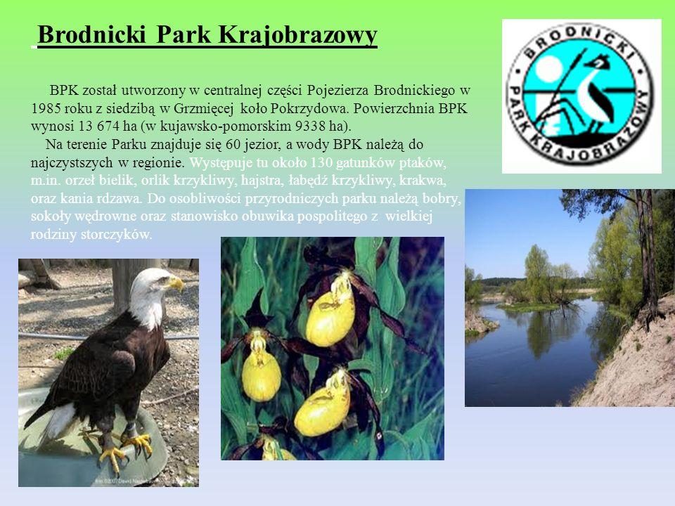 Brodnicki Park Krajobrazowy BPK został utworzony w centralnej części Pojezierza Brodnickiego w 1985 roku z siedzibą w Grzmięcej koło Pokrzydowa. Powie