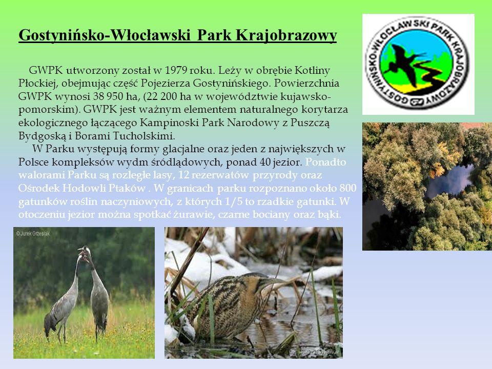 Gostynińsko-Włocławski Park Krajobrazowy GWPK utworzony został w 1979 roku. Leży w obrębie Kotliny Płockiej, obejmując część Pojezierza Gostynińskiego