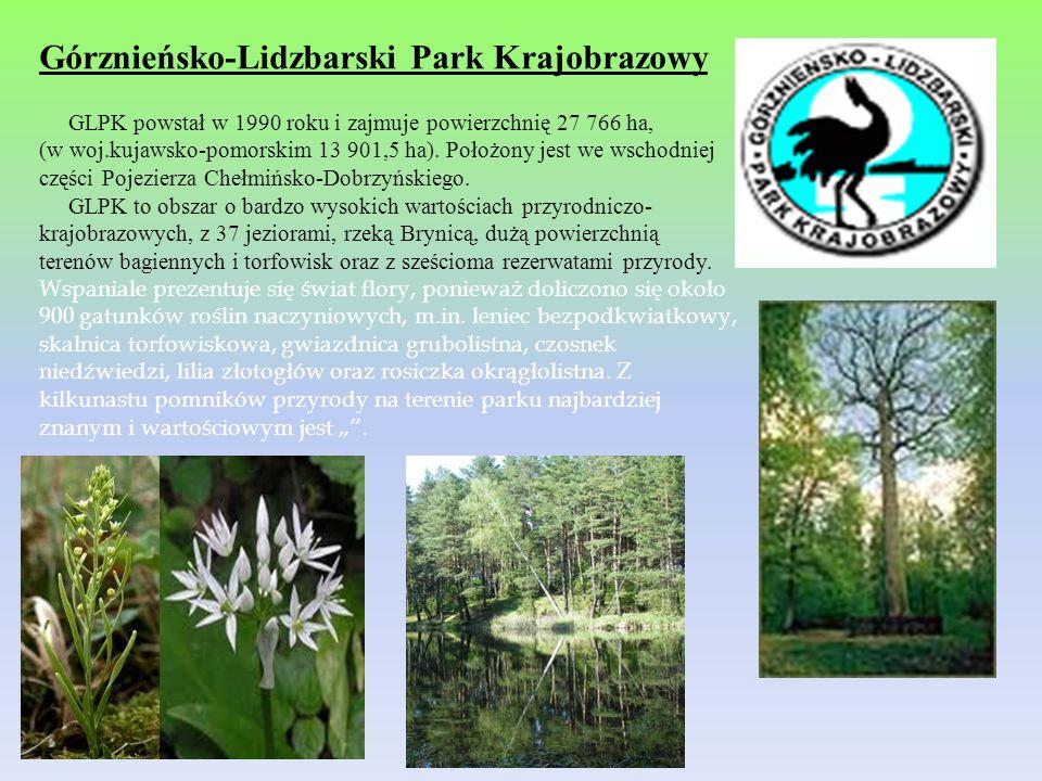 Górznieńsko-Lidzbarski Park Krajobrazowy GLPK powstał w 1990 roku i zajmuje powierzchnię 27 766 ha, (w woj.kujawsko-pomorskim 13 901,5 ha). Położony j
