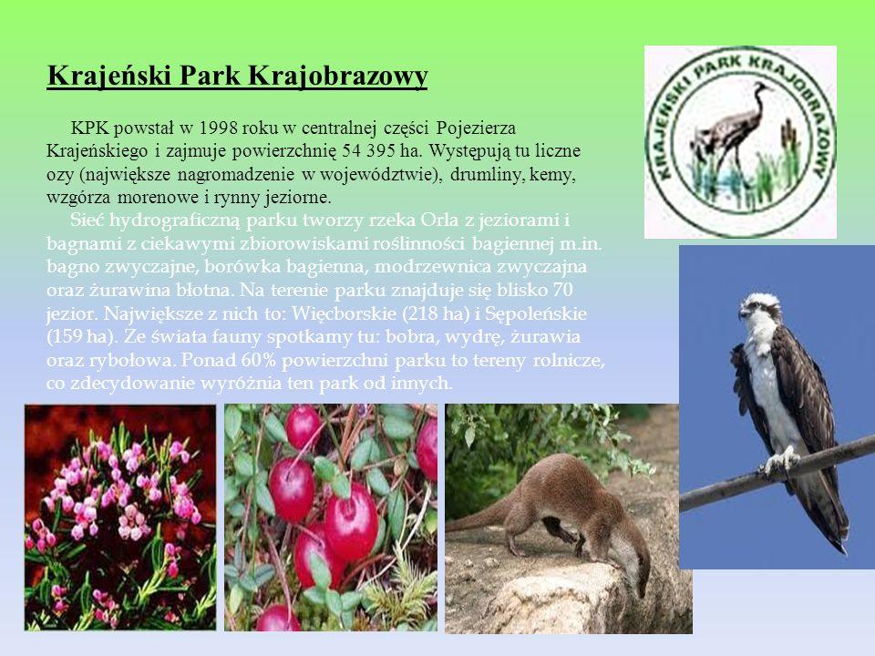 Krajeński Park Krajobrazowy KPK powstał w 1998 roku w centralnej części Pojezierza Krajeńskiego i zajmuje powierzchnię 54 395 ha. Występują tu liczne