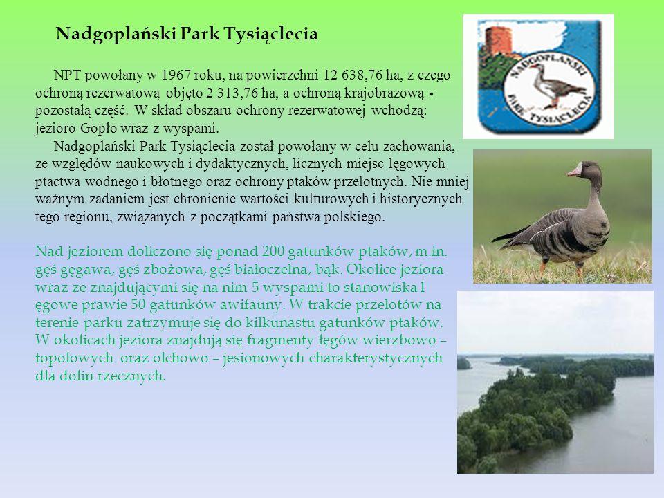 NPT powołany w 1967 roku, na powierzchni 12 638,76 ha, z czego ochroną rezerwatową objęto 2 313,76 ha, a ochroną krajobrazową - pozostałą część. W skł