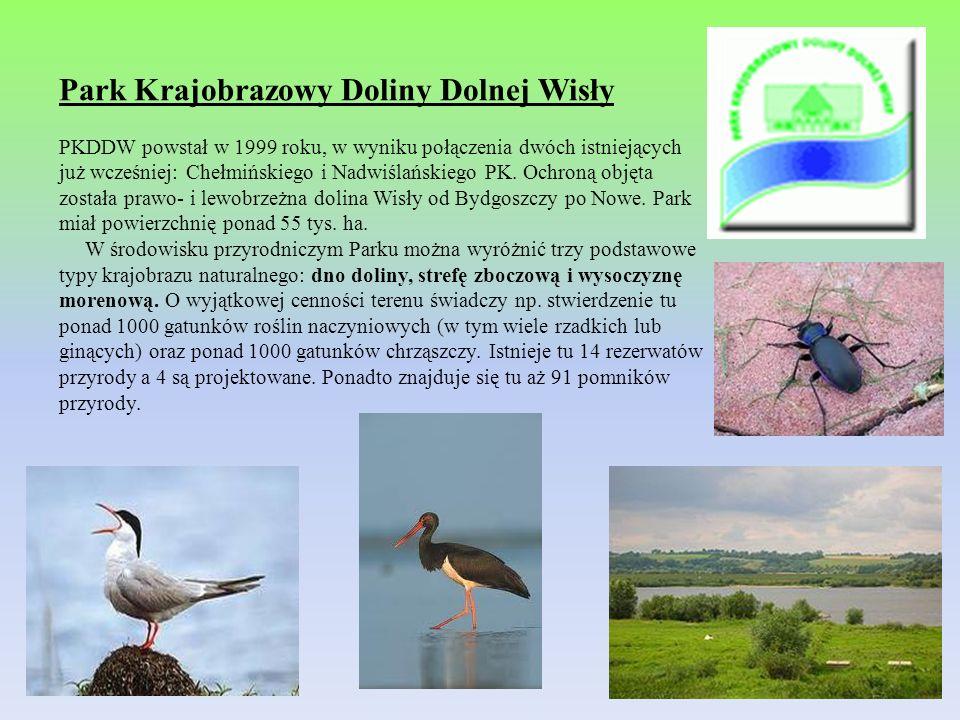 Park Krajobrazowy Doliny Dolnej Wisły PKDDW powstał w 1999 roku, w wyniku połączenia dwóch istniejących już wcześniej: Chełmińskiego i Nadwiślańskiego