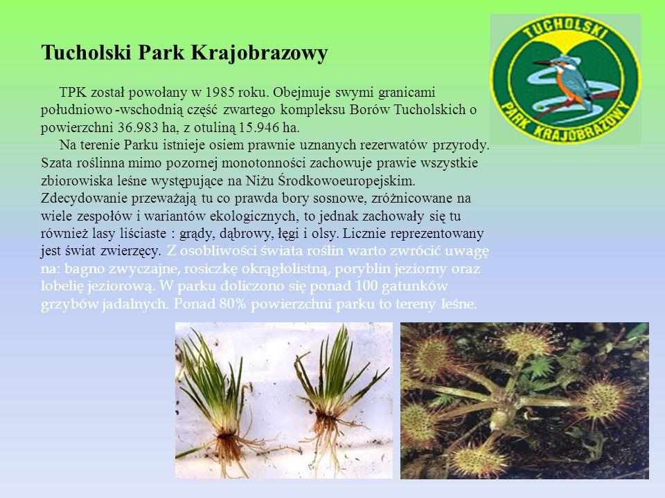 Tucholski Park Krajobrazowy TPK został powołany w 1985 roku. Obejmuje swymi granicami południowo -wschodnią część zwartego kompleksu Borów Tucholskich