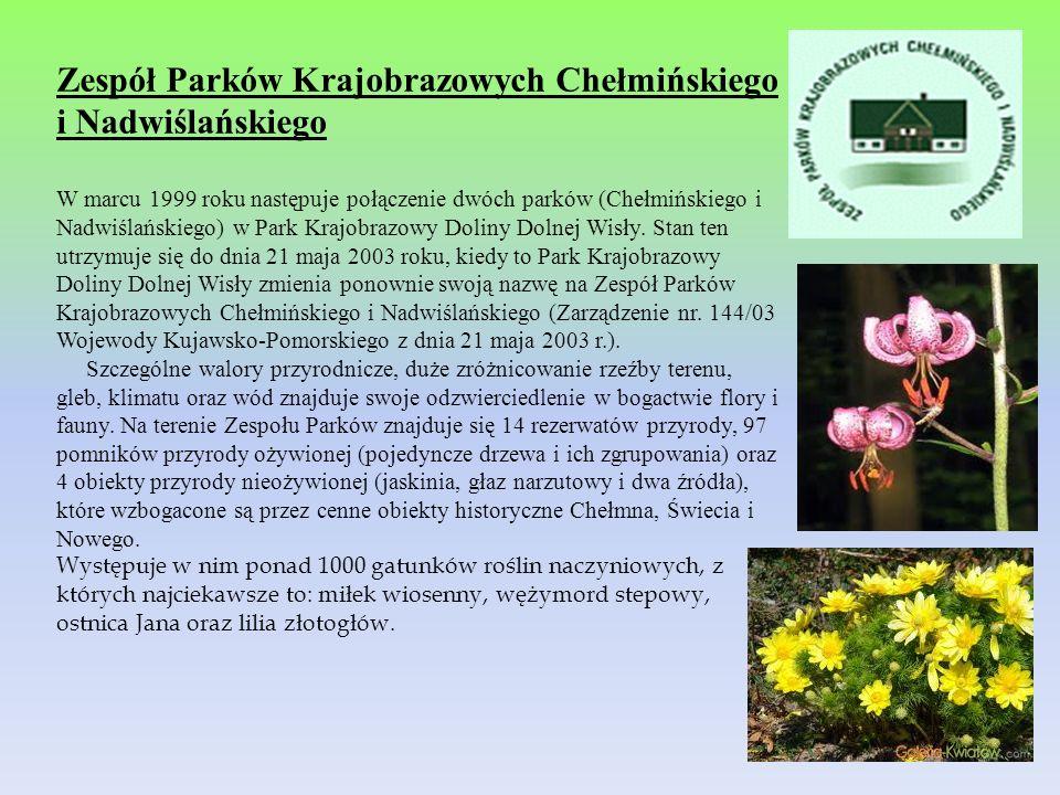 Zespół Parków Krajobrazowych Chełmińskiego i Nadwiślańskiego W marcu 1999 roku następuje połączenie dwóch parków (Chełmińskiego i Nadwiślańskiego) w P