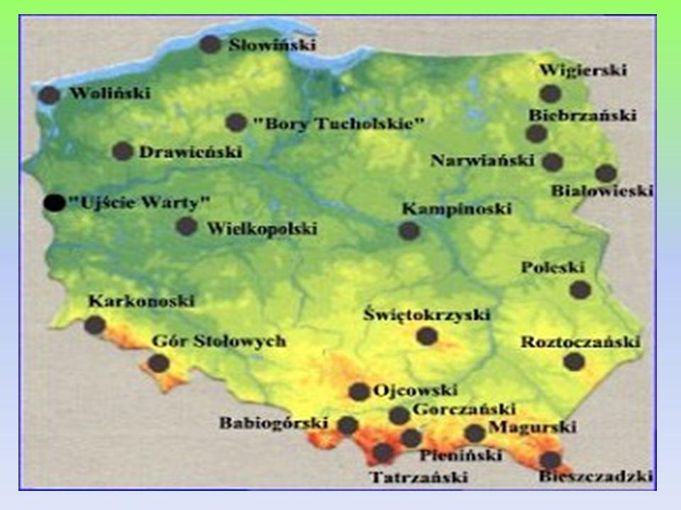 Gostynińsko-Włocławski Park Krajobrazowy GWPK utworzony został w 1979 roku.