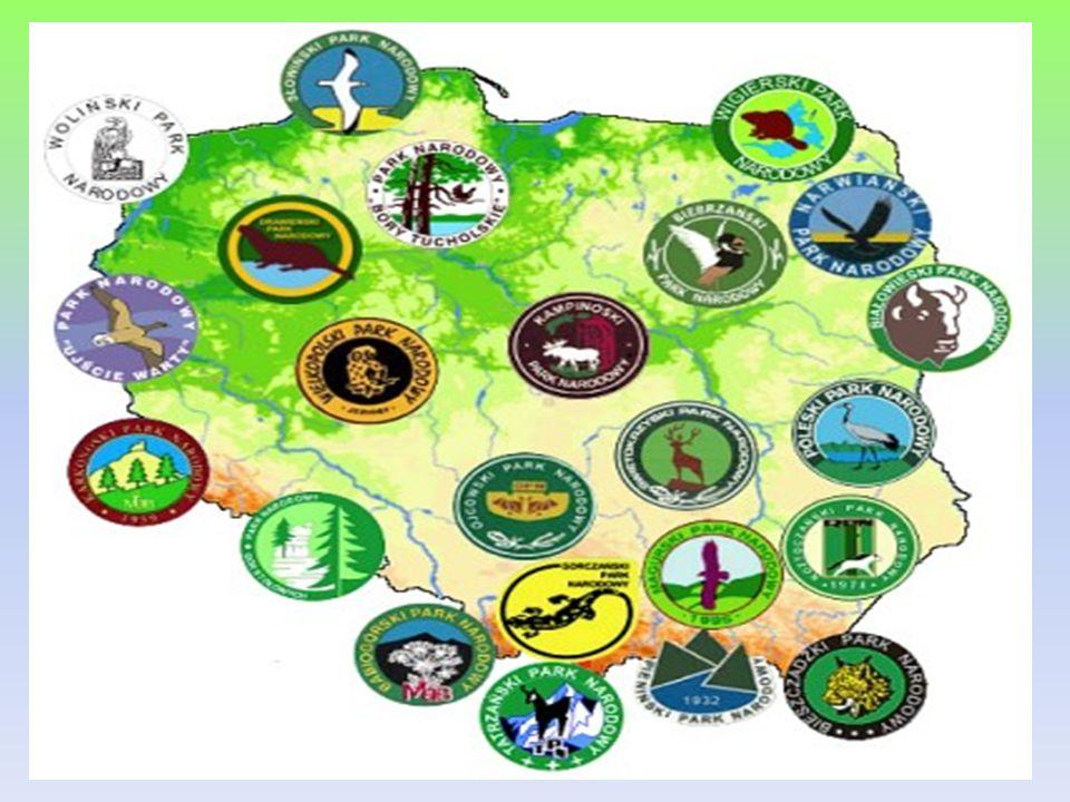 PARK NARODOWY BORY TUCHOLSKIE Położenie, powierzchnia Park Narodowy Bory Tucholskie utworzono 1 lipca 1996 roku.