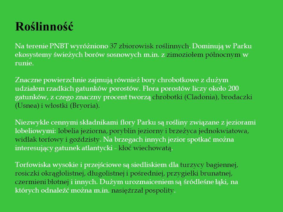 Roślinność Na terenie PNBT wyróżniono 37 zbiorowisk roślinnych. Dominują w Parku ekosystemy świeżych borów sosnowych m.in. z zimoziołem północnym w ru