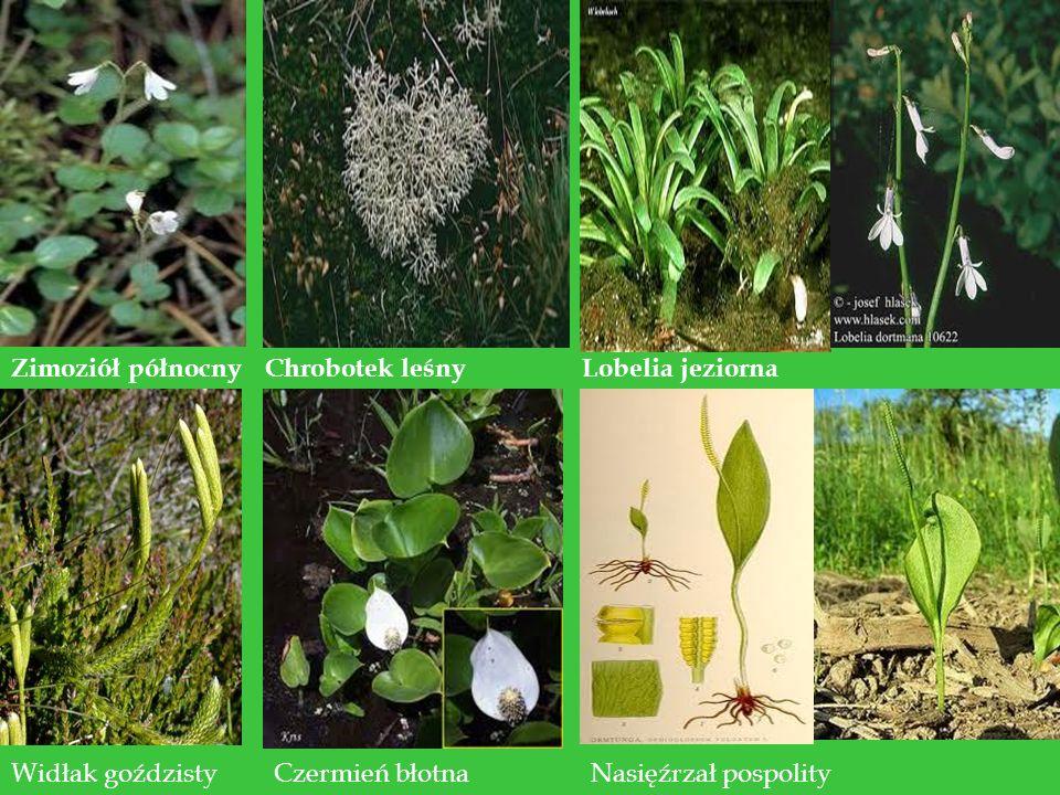 Zwierzęta W jeziorach Parku występuje 25 gatunków ryb np: sieja, sielawa, węgorz, okoń, lin, leszcz, różanka, koza, miętus.