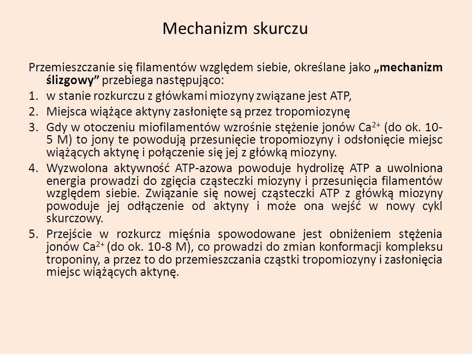 Mechanizm skurczu Przemieszczanie się filamentów względem siebie, określane jako mechanizm ślizgowy przebiega następująco: 1.w stanie rozkurczu z głów