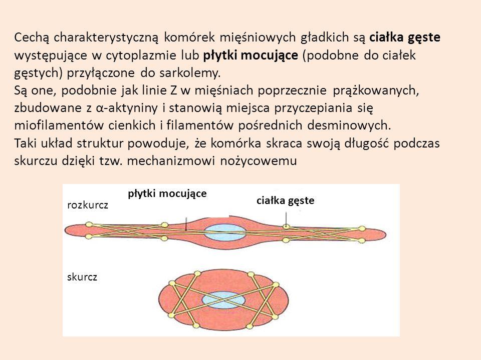 Cechą charakterystyczną komórek mięśniowych gładkich są ciałka gęste występujące w cytoplazmie lub płytki mocujące (podobne do ciałek gęstych) przyłąc