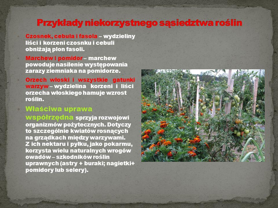 Czosnek, cebula i fasola – wydzieliny liści i korzeni czosnku i cebuli obniżają plon fasoli. Marchew i pomidor – marchew powoduje nasilenie występowan