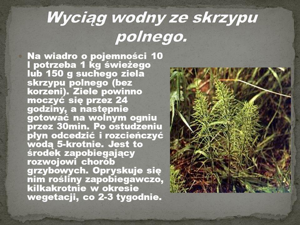 Na wiadro o pojemności 10 l potrzeba 1 kg świeżego lub 150 g suchego ziela skrzypu polnego (bez korzeni). Ziele powinno moczyć się przez 24 godziny, a