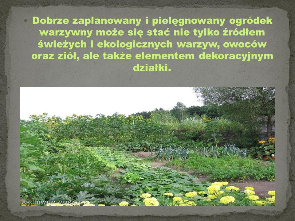 Dobrze zaplanowany i pielęgnowany ogródek warzywny może się stać nie tylko źródłem świeżych i ekologicznych warzyw, owoców oraz ziół, ale także elemen