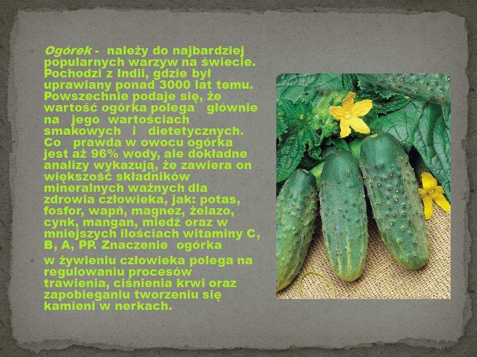 Ogórek - należy do najbardziej popularnych warzyw na świecie. Pochodzi z Indii, gdzie był uprawiany ponad 3000 lat temu. Powszechnie podaje się, że wa