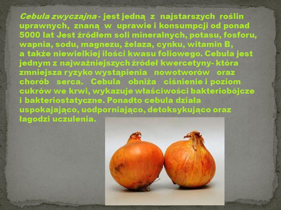 Cebula zwyczajna - jest jedną z najstarszych roślin uprawnych, znaną w uprawie i konsumpcji od ponad 5000 lat Jest źródłem soli mineralnych, potasu, f