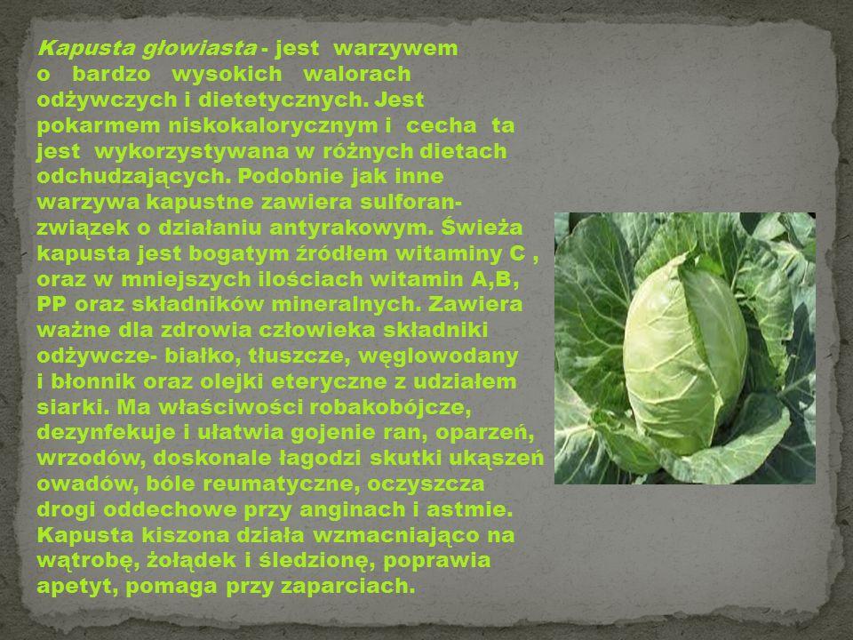 Kapusta głowiasta - jest warzywem o bardzo wysokich walorach odżywczych i dietetycznych. Jest pokarmem niskokalorycznym i cecha ta jest wykorzystywana