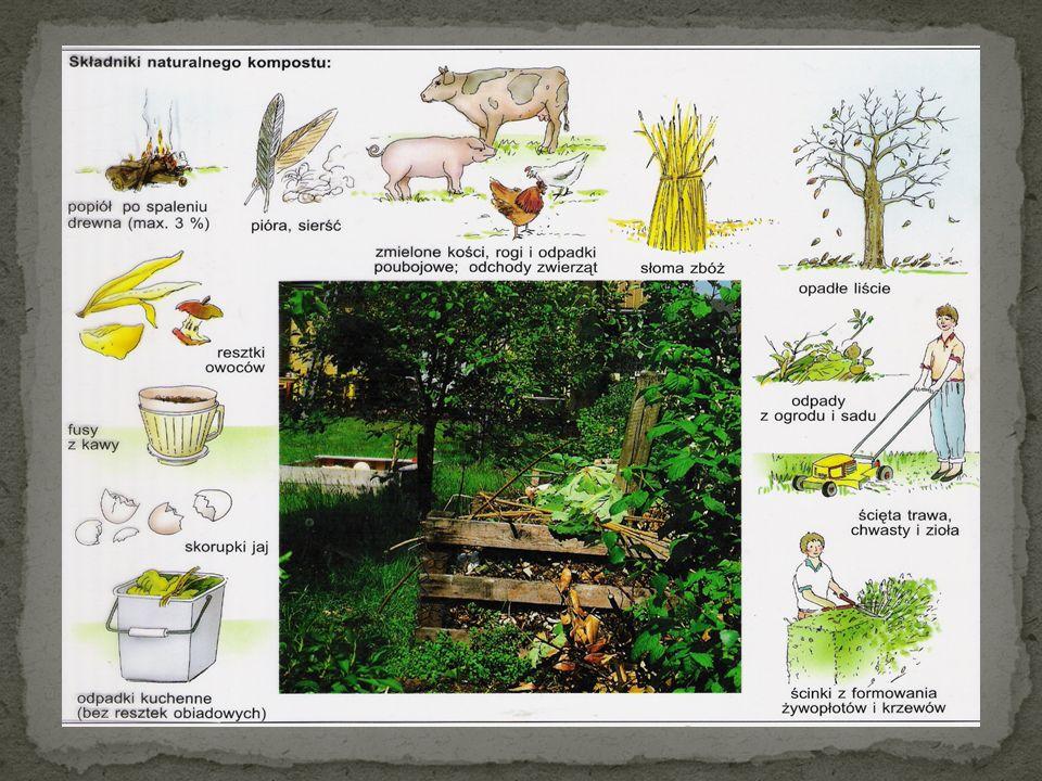 Bardzo korzystna jest uprawa współrzędna warzyw, polegająca na uprawie obok siebie różnych gatunków.