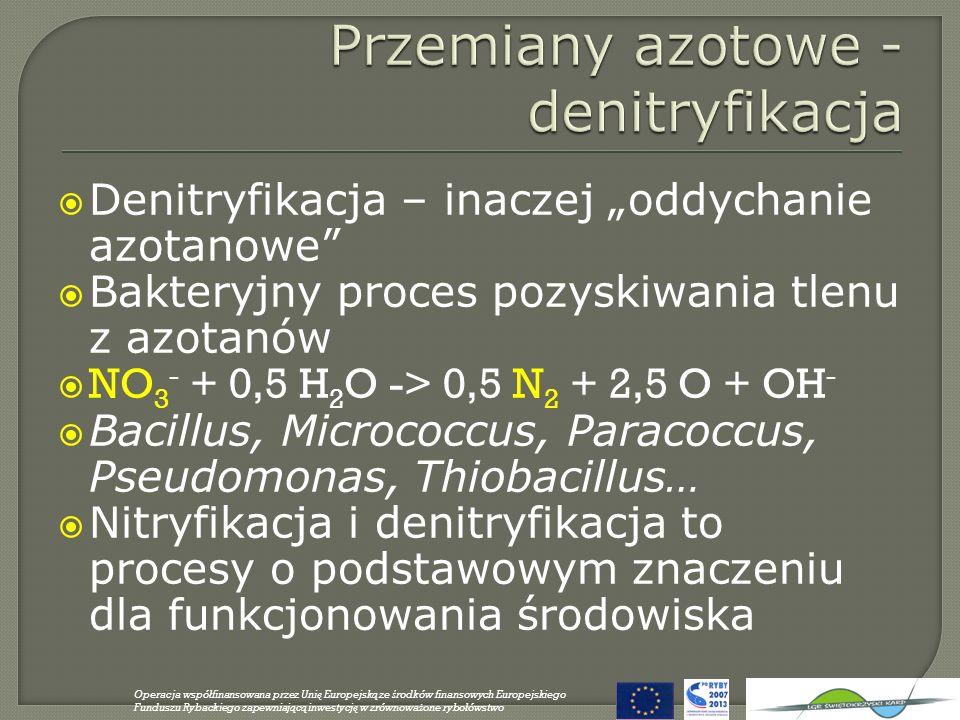 Denitryfikacja – inaczej oddychanie azotanowe Bakteryjny proces pozyskiwania tlenu z azotanów NO 3 - + 0,5 H 2 O -> 0,5 N 2 + 2,5 O + OH - Bacillus, M