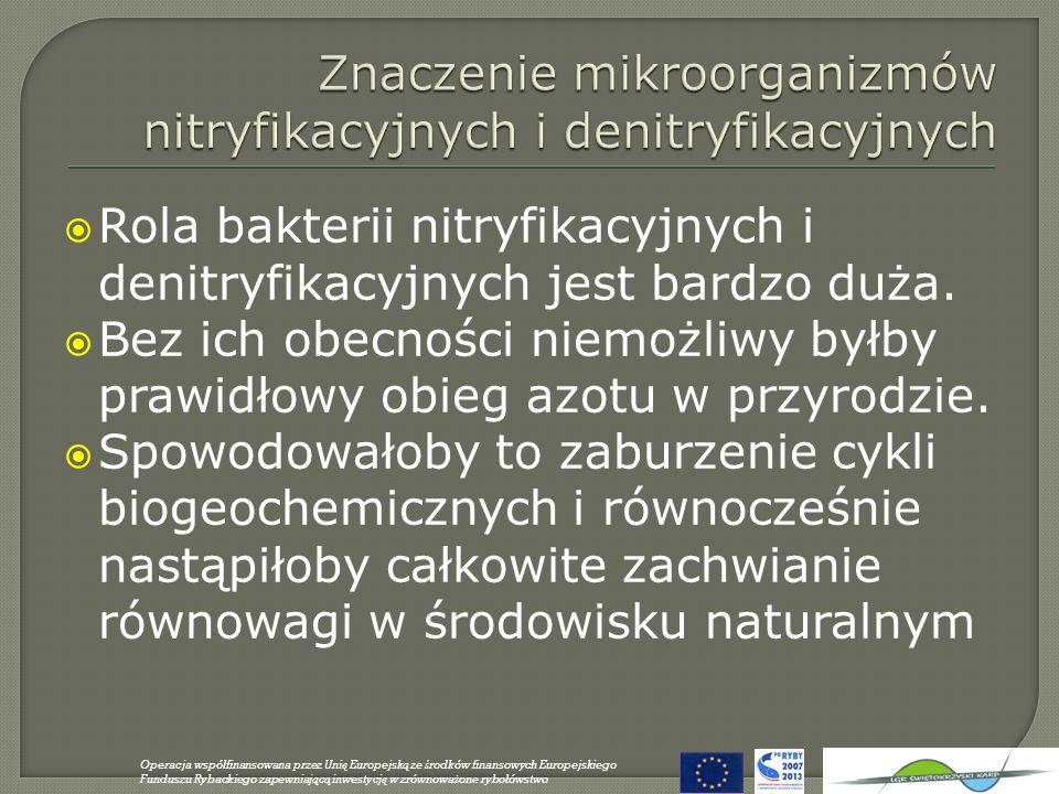 Rola bakterii nitryfikacyjnych i denitryfikacyjnych jest bardzo duża. Bez ich obecności niemożliwy byłby prawidłowy obieg azotu w przyrodzie. Spowodow