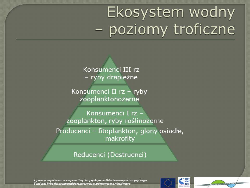 Reducenci (Destruenci) Producenci – fitoplankton, glony osiadłe, makrofity Konsumenci I rz – zooplankton, ryby roślinożerne Konsumenci II rz – ryby zo