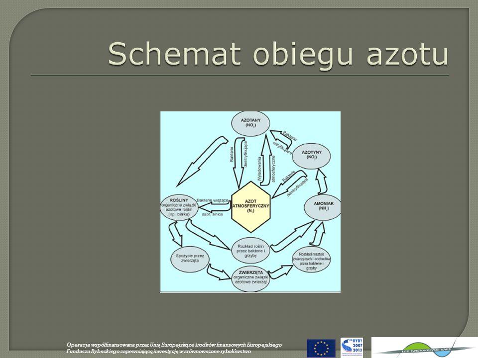Glony: organizmy samożywne (fotosynteza) jedno- i wielokomórkowe planktonowe i osiadłe nitkowate, plechowe etc… Sinice (Cyanobacteria): organizmy samożywne planktonowe i osiadłe często niepożądany składnik biocenoz wodnych mogą uwalniać toksyny Operacja wspó ł finansowana przez Uni ę Europejsk ą ze ś rodków finansowych Europejskiego Funduszu Rybackiego zapewniaj ą c ą inwestycj ę w zrównowa ż one rybo ł ówstwo