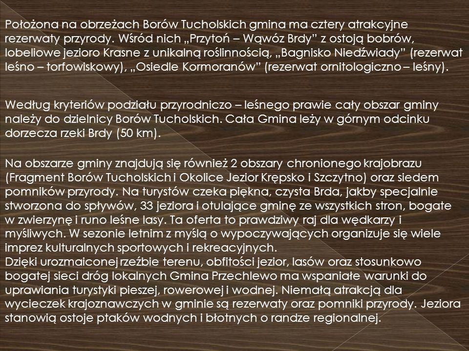 Według kryteriów podziału przyrodniczo – leśnego prawie cały obszar gminy należy do dzielnicy Borów Tucholskich. Cała Gmina leży w górnym odcinku dorz