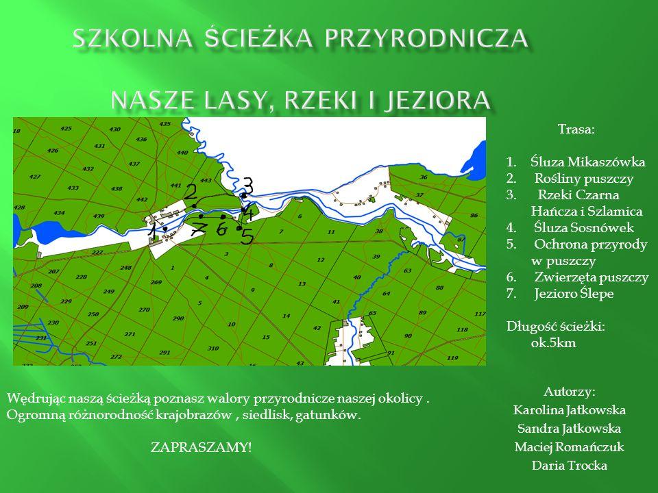 Nasza gmina leży na obszarze Puszczy Augustowskiej, stąd 82% jej powierzchni porastają lasy – bory sosnowe i sosnowo- świerkowe, grądy, olsy, łęgi.