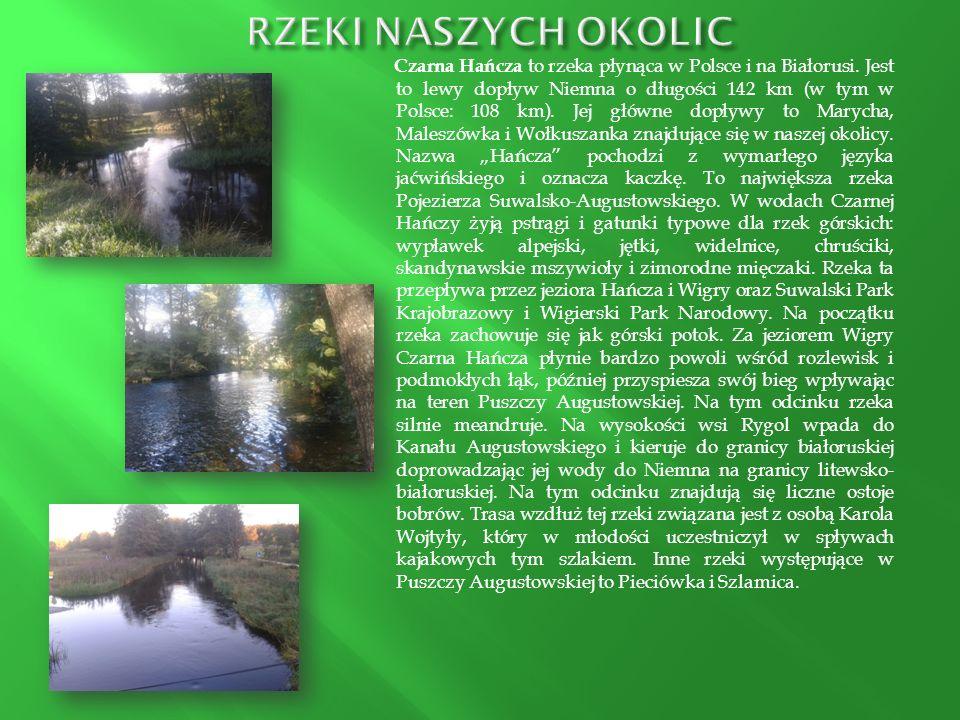Czarna Hańcza to rzeka płynąca w Polsce i na Białorusi. Jest to lewy dopływ Niemna o długości 142 km (w tym w Polsce: 108 km). Jej główne dopływy to M