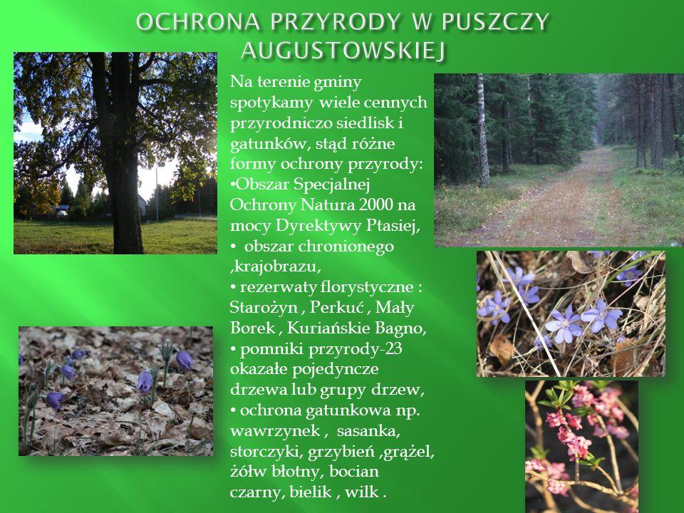 Na terenie gminy spotykamy wiele cennych przyrodniczo siedlisk i gatunków, stąd różne formy ochrony przyrody: Obszar Specjalnej Ochrony Natura 2000 na
