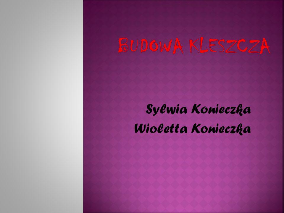 Sylwia Konieczka Wioletta Konieczka