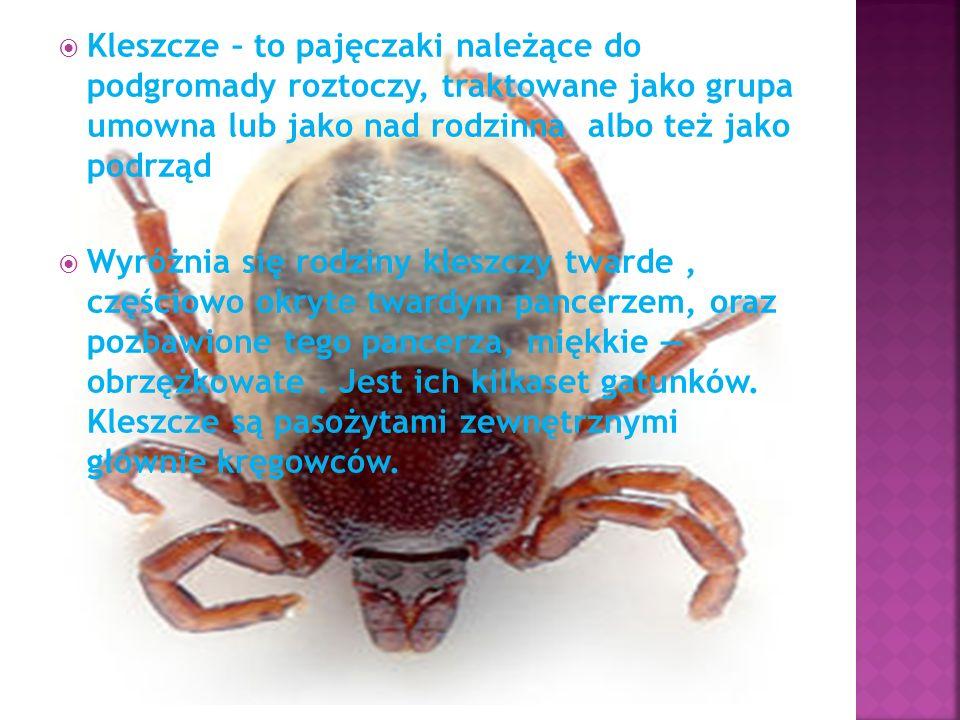 Kleszcze – to pajęczaki należące do podgromady roztoczy, traktowane jako grupa umowna lub jako nad rodzinna albo też jako podrząd Wyróżnia się rodziny