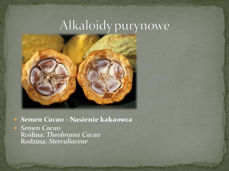Semen Cacao - Nasienie kakaowca Semen Cacao Roślina: Theobroma Cacao Rodzina: Sterculiaceae
