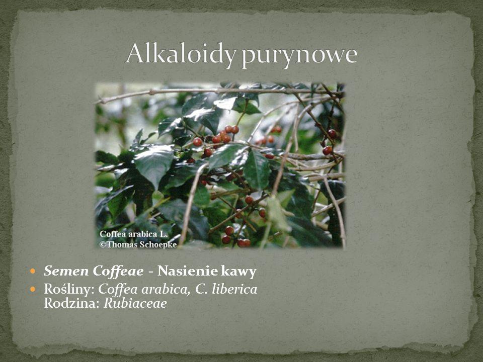 Semen Coffeae - Nasienie kawy Rośliny: Coffea arabica, C. liberica Rodzina: Rubiaceae
