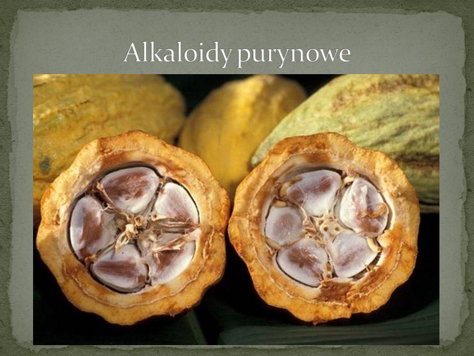 Embrio Colae - Zarodek Kola Synonim: Semen Colae Rośliny: Cola vera, Cola acuminata, Cola nitida Rodzina: Sterculiacae