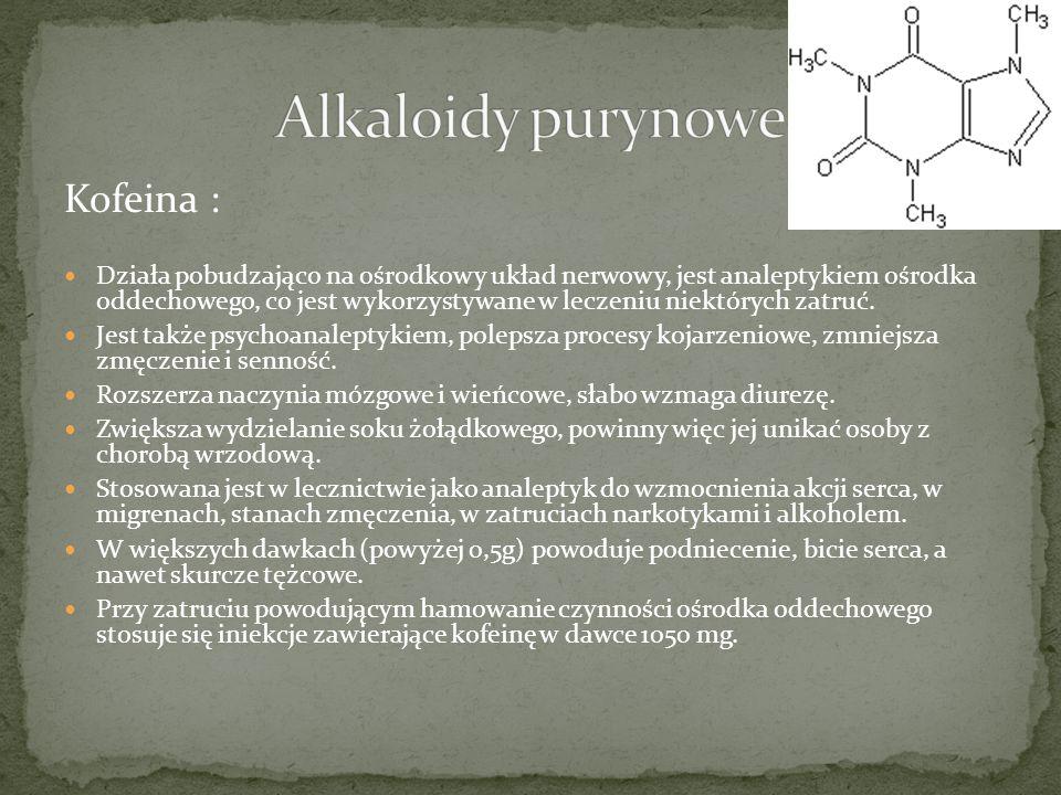 Folium Theae - Liść herbaty Roślina: Camelia sinensis (Thea sinensis) - herbata chińska Rodzina: Theaceae