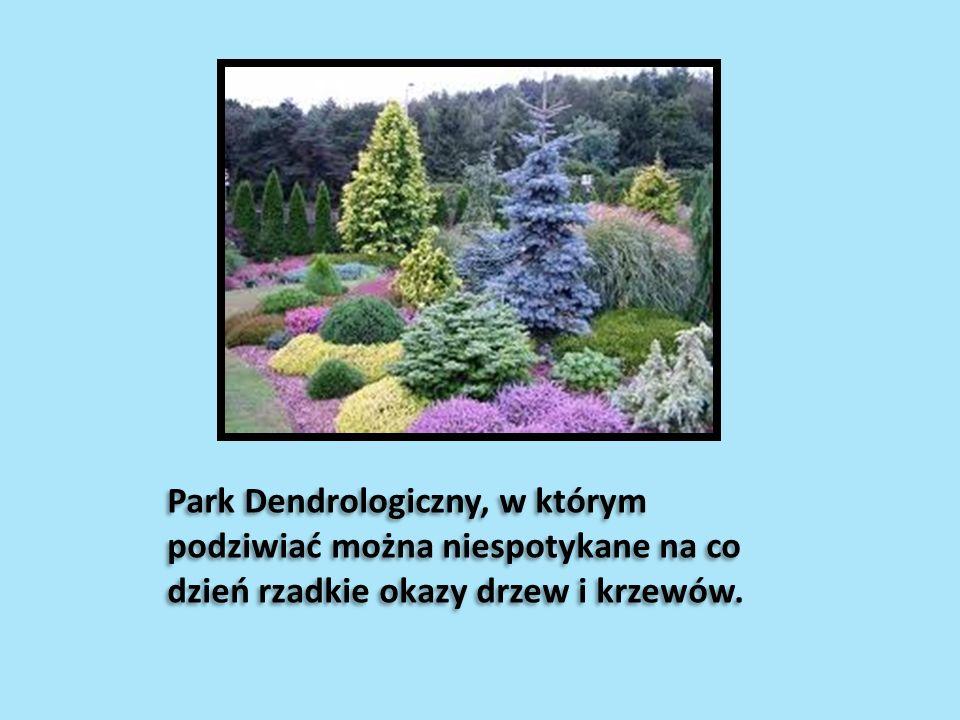 … Park Dendrologiczny, w którym podziwiać można niespotykane na co dzień rzadkie okazy drzew i krzewów.