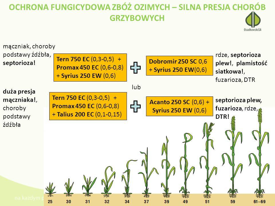 OCHRONA FUNGICYDOWA ZBÓŻ OZIMYCH – SILNA PRESJA CHORÓB GRZYBOWYCH Tern 750 EC (0,3-0,5) + Promax 450 EC (0,6-0,8) + Syrius 250 EW (0,6) Dobromir 250 S