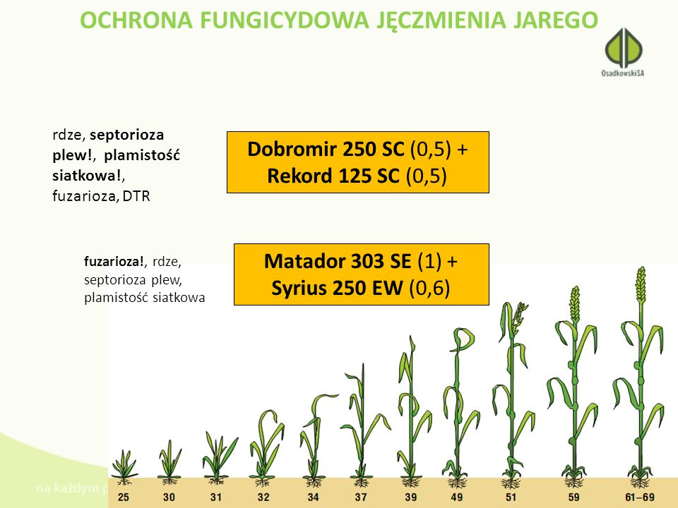 OCHRONA FUNGICYDOWA JĘCZMIENIA JAREGO Dobromir 250 SC (0,5) + Rekord 125 SC (0,5) rdze, septorioza plew!, plamistość siatkowa!, fuzarioza, DTR Matador