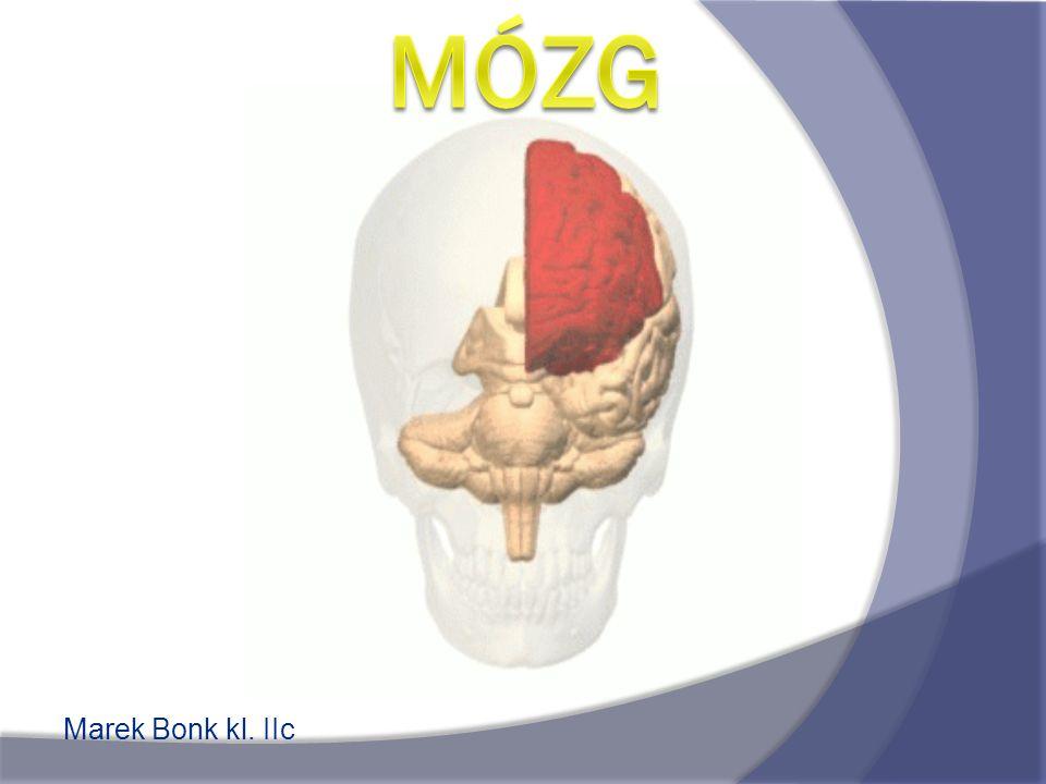 Ogólne wiadomości Mózg – inaczej mózgowie, część ośrodkowego układu nerwowego umieszczona w obrębie czaszki, otoczona oponami mózgowo-rdzeniowymi.