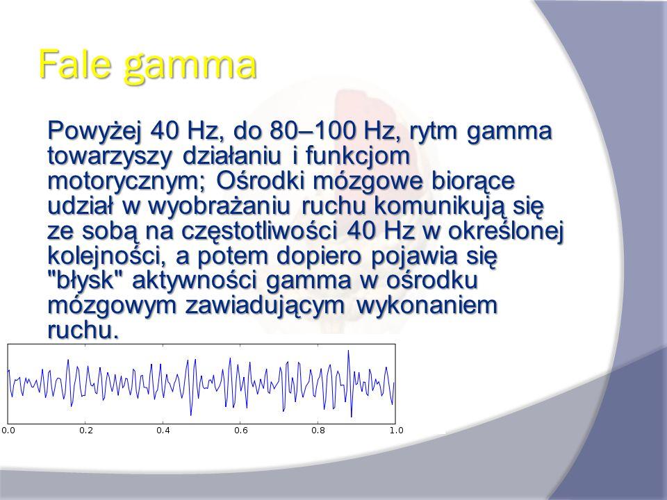 Fale gamma Powyżej 40 Hz, do 80–100 Hz, rytm gamma towarzyszy działaniu i funkcjom motorycznym; Ośrodki mózgowe biorące udział w wyobrażaniu ruchu kom