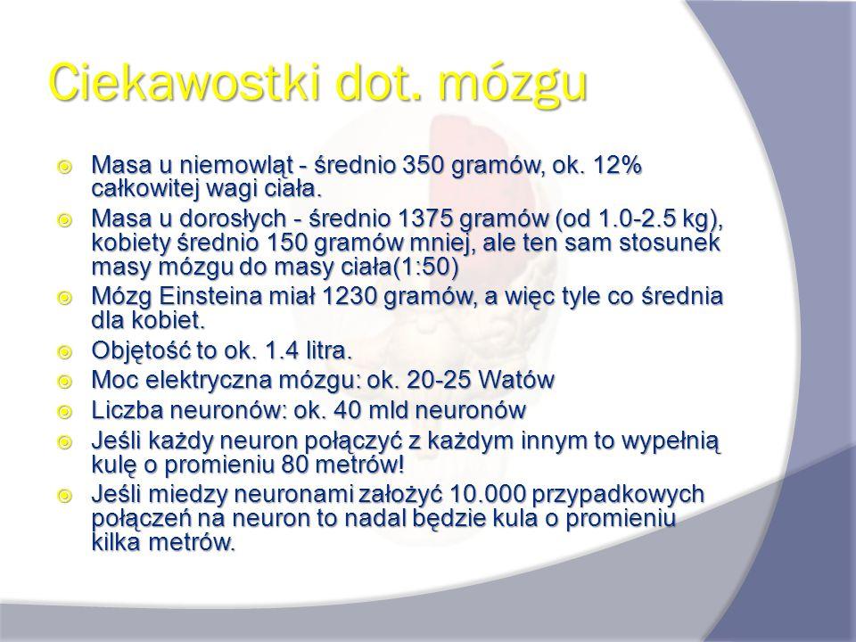 Ciekawostki dot. mózgu Masa u niemowląt - średnio 350 gramów, ok. 12% całkowitej wagi ciała. Masa u niemowląt - średnio 350 gramów, ok. 12% całkowitej