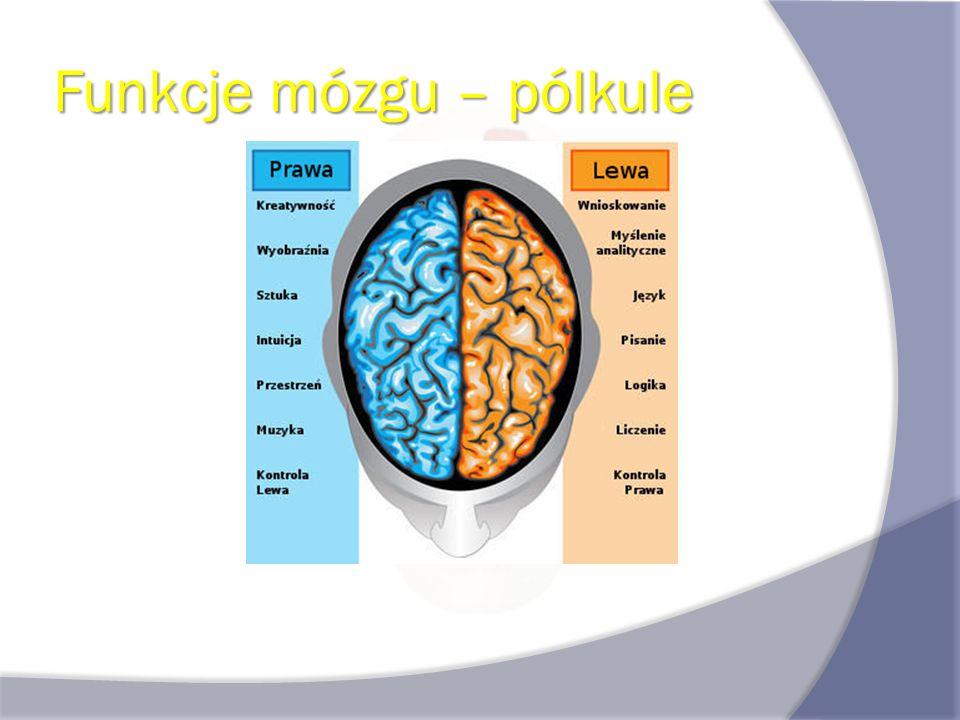 Dzałanie mózgu Zasada działania mózgu polega na: przekazywaniu sygnałów elektrycznych - potencjałów czynnościowych w obrębie neuronu przekazywaniu sygnałów elektrycznych - potencjałów czynnościowych w obrębie neuronu przekazywaniu sygnałów chemicznych (neuroprzekaźnik) w obrębie synapsy.