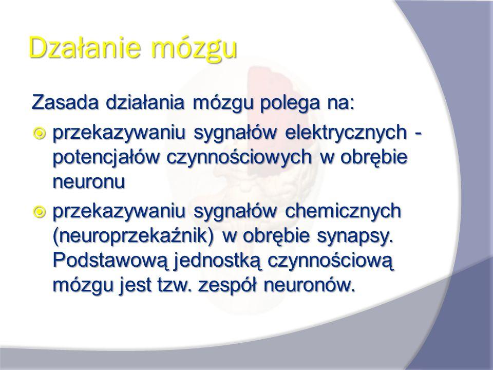 Dzałanie mózgu Zasada działania mózgu polega na: przekazywaniu sygnałów elektrycznych - potencjałów czynnościowych w obrębie neuronu przekazywaniu syg