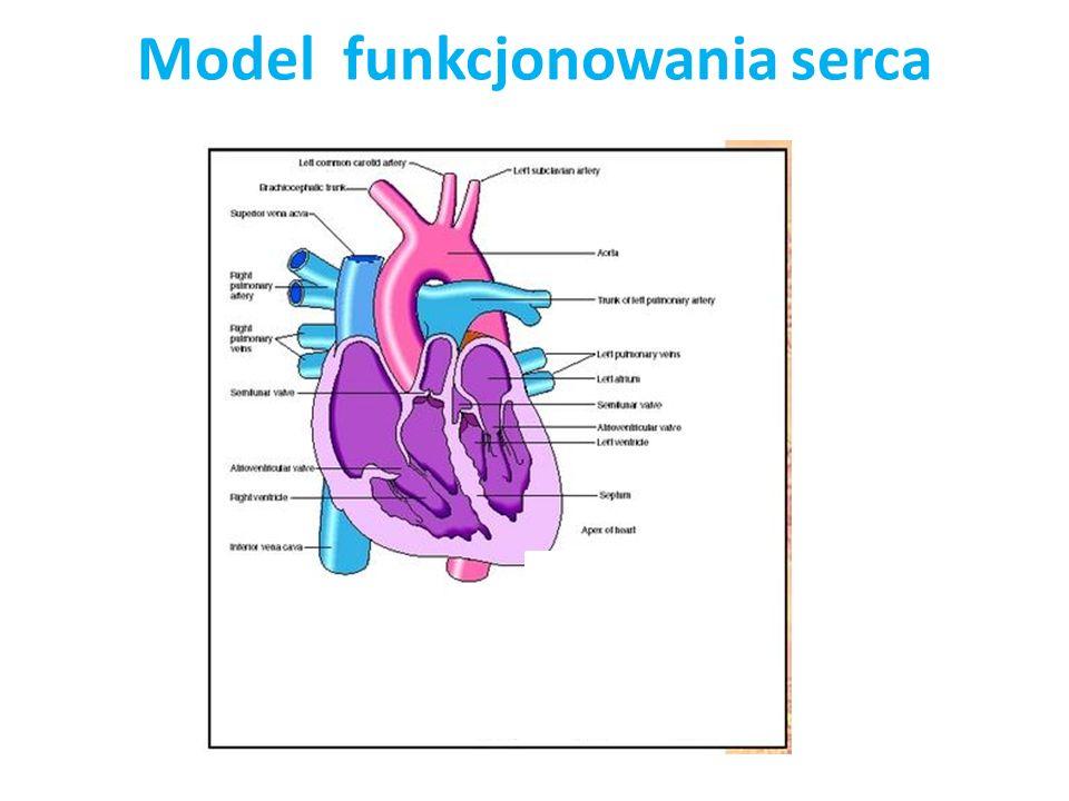 Model funkcjonowania serca