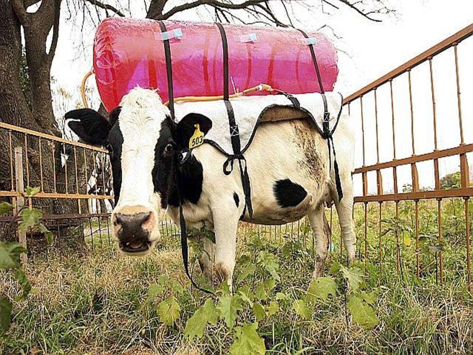 Agriculture 40% Packaging 23 % Distribution 28% Cykl życia jogurtu: 2kg CO 2 / 1kg jogurtu 28% Transport i dystrybucja 40% Rolnictwo 9% Fabryki 23% Opakowania